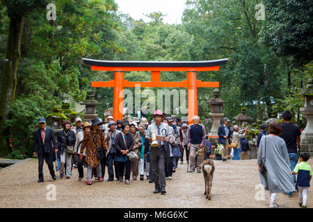Wild deer and japanese guided tour visiting the red torii in Kasuga-taisha in Nara, a major tourism destination - Stock Photo