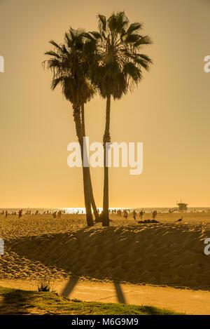 strand, sol, palmer, semester, badvakt, hav, varmt, beach, sun, palm trees, vacation, lifeguard, sea, hot, - Stock Photo