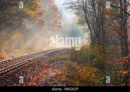 Railway track / line running through woodland in the autumn UK - Stock Photo
