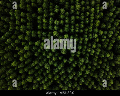 This image was shot at the state forrest at Beerwah.Green pine trees shot in a forest. Aerial landscape image from - Stock Photo