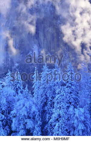 Snow-covered Pines and Mist after Storm, and El Capitan, Yosemite National Park, California - Stock Photo