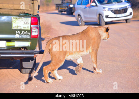 Kruger park, South Africa - Stock Photo