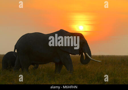 Serengeti National Park in Tanzania, is one of the most spectacular wildlife destinations on earth. Elephants on - Stock Photo