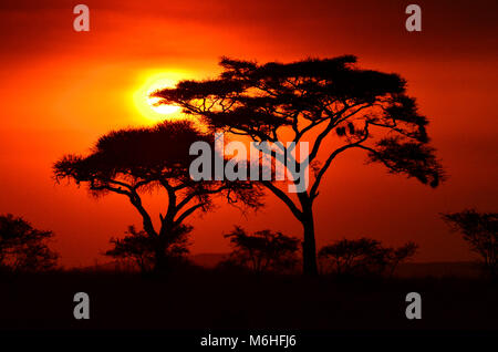 Serengeti National Park in Tanzania, is one of the most spectacular wildlife destinations on earth. Acacia Tortilla silhoutte against smoky red sunset.