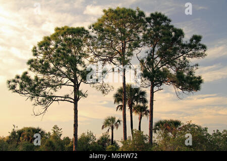 Scenic Subtropical Landscape in Big Cypress National Preserve in the Florida Everglades - Stock Photo