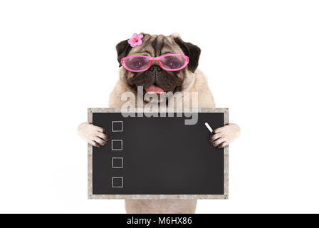 cute female pug dog puppy holding up blank checklist on blackboard with check boxes drawn with chalk, isolated on - Stock Photo