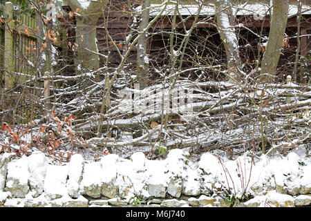 One of (40) images in this Acton Burnell winter set. Combining objects, signs, plant-life, snow drifts and snow - Stock Photo