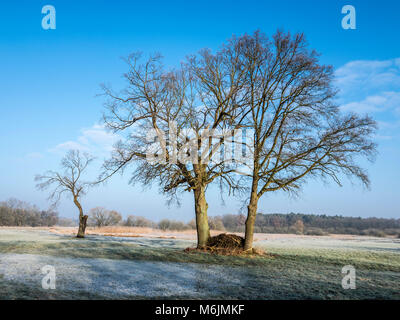 Trees on a frozen meadow at the Aller cycle path, river Aller ,  between Celle and Altencelle, Germany - Stock Photo