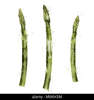 Asparagus on white background. Watercolor illustration - Stock Photo