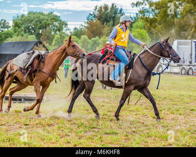 Rider leading a horse in the King of the Ranges Stockman's Challenge in Murrurundi, NSW, Australia, February 24, - Stock Photo