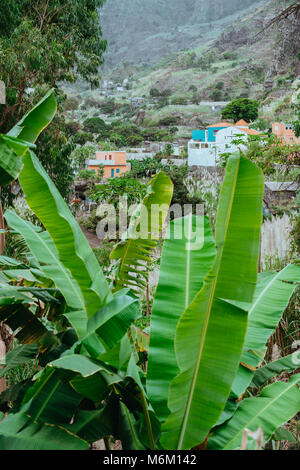 Banana leaves and typical dwellings in the Paul Valley. Many cultivated plants growing on the route down the valley. - Stock Photo