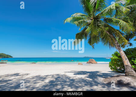 Palm tree on Anse Lazio beach, Praslin island, Seychelles. - Stock Photo
