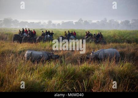 Tourists watching rhino on an elephant back safari - Stock Photo