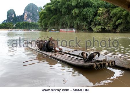 Old Chinese fisherman on bamboo draft with cormorants on Li River near Xingping, between Yangshuo and Guilin, Guangxi, - Stock Photo