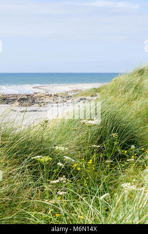 Beach and sea on a sunny day seen through the long grasses and wildflowers of the sand dunes - Stock Photo