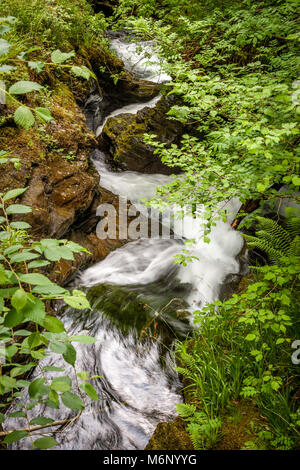 The River Lyd cascading down stepped waterfalls at Lydford Gorge near Okehampton in Devon UK - Stock Photo