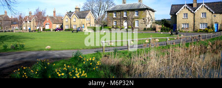 Spring Daffodils around the duck pond, Ramsey town, Cambridgeshire, England, UK - Stock Photo