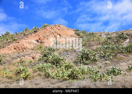 Geological landscape of rock and cactus to the east of Vila Baleira, Porto Santo, Portugal - Stock Photo