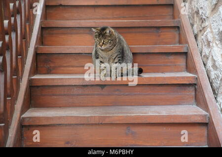 Lovely grey fat cat sitting on the wooden staircase and looking with curious eyes - Stock Photo