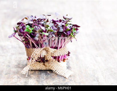 Purple  radish fresh sprouts with sack cloth ribbon on wooden table - Stock Photo