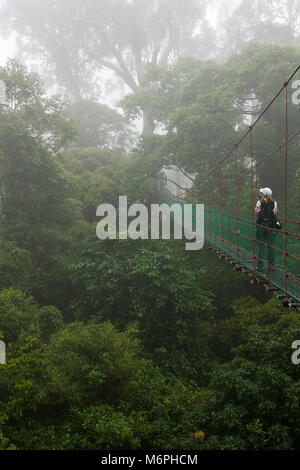 Woman looking at the view from a  canopy walkway in tropical lowland rainforest at the Borneo Rainforest Lodge - Stock Photo