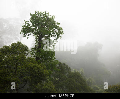 Tropical lowland dipterocarp rainforest in Danum Valley Conservation Area - Stock Photo