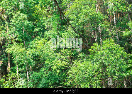 Tropical trees on mountain in deep rain forest background - Stock Photo