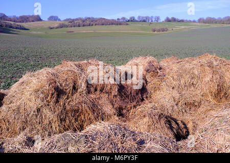 Cow manure and straw fertilizer heaped alongside farm fields, Kent UK. - Stock Photo