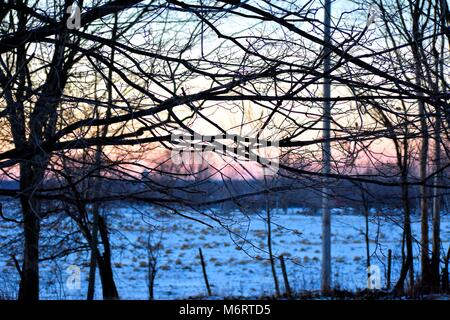 A winter sun sets over a horse farm in Northern New York, silhouetting a web of trees. - Stock Photo