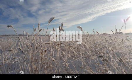 Winter landscape plant covered with snow against the background of sunset. Frozen growths against the background - Stock Photo