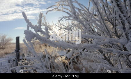 Beautiful wooden fence in winter. Planks covered with snow. Against the backdrop of bushes and trees strewn with - Stock Photo
