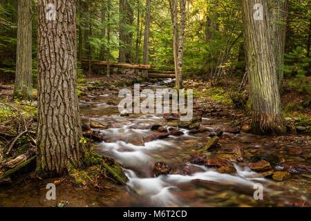 Jackson Creek, Glacier National Park, Montana - Stock Photo