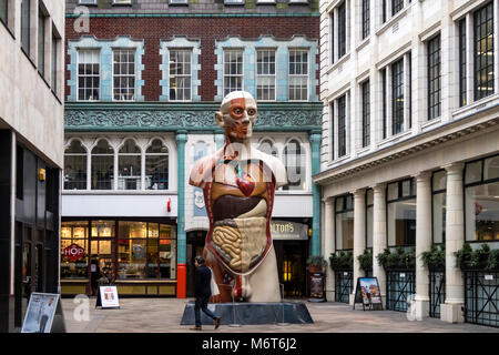 'Temple 2008' is a painted bronze sculpture of a male torso with musculature and organs exposed.  It is part of - Stock Photo