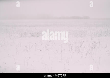 Snow-covered Field In Winter Frosty Day. Minimalism In Winter Landscape. - Stock Photo