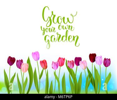 Tulip spring banner