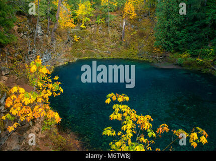 Tamolitch Falls, Blue Pool, McKenzie River National Wild and Scenic River, Willamette National Forest, Oregon - Stock Photo