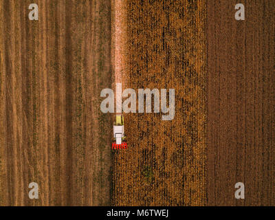 Corn maize harvest, aerial view of combine harvester working on ripe maize crop field from drone pov - Stock Photo
