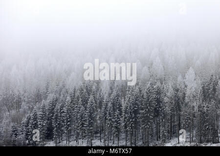 Landscape with fog over snowy forest in winter. - Stock Photo