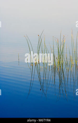 Peaceful pond with bull rushes in Seney National Wildlife Refuge, Michigan, USA - Stock Photo