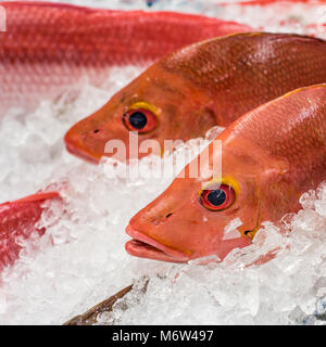 Red snapper at a fish market - Stock Photo