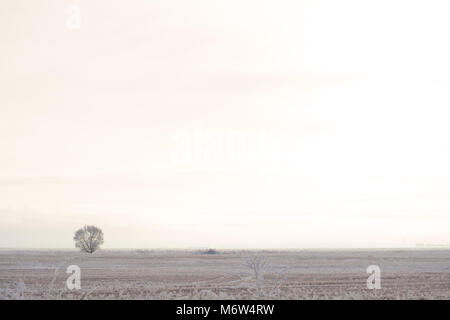 A lonely tree in a field covered with hoarfrost in the winter. Minimalism on a white winter background - Stock Photo