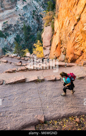 Hikers at Angels Landing Trail, Walters Wiggles switchbacks near Scout Lookout, Zion National Park, Utah, USA - Stock Photo