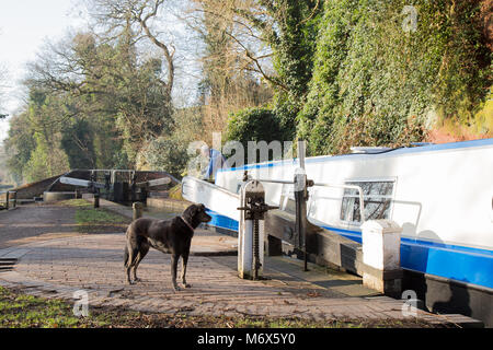 Kidderminster, UK. 7th March, 2018. UK weather: glorious sunshine in Kidderminster sees this traveller and his canine - Stock Photo