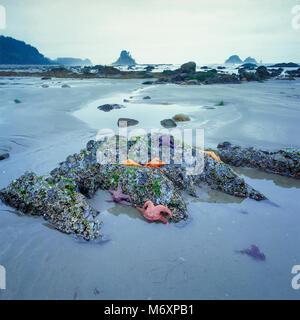 Tidepool, Ozette Beach, Olympic National Park, Washington - Stock Photo
