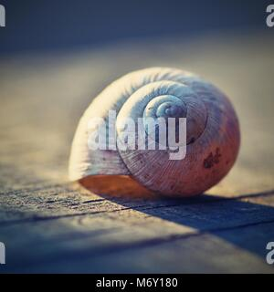 Close up of snail shell on plank - Stock Photo