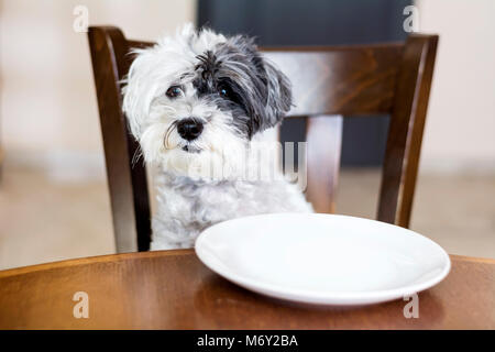 Dog sitting on wooden chair - Stock Photo