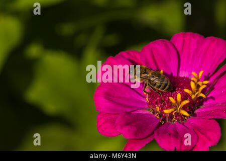 Close-up bee on flower - Stock Photo