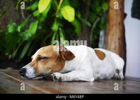 The sleepy dog is trying to sleep - Stock Photo