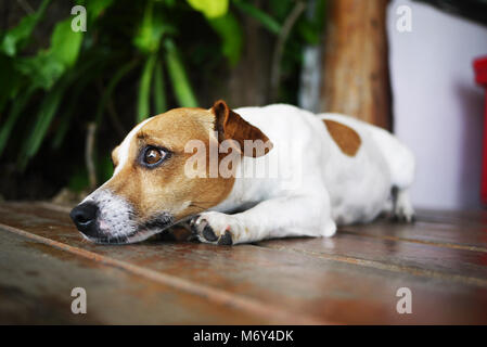 The sleepy dog that looking forward for something. - Stock Photo