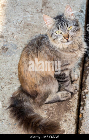 Portrait of a young cat resting outside, big tail - Stock Photo